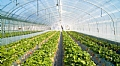 Ginegar Greenhouse Coverings with Multi-Layer Technology