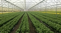 Controlling Irrigation and Fertigation Benefits the Farmers