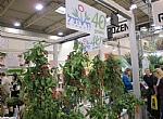 IPM ESSEN-The World's Premier Horticultural fair - The Exhibitors from Israel