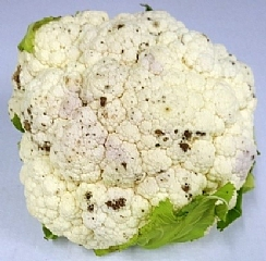ExtendCast XC-Cauliflower Preserves the Freshness and Eating Quality (Enlarge)