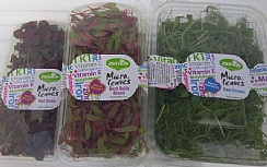 Microgreens – Fresh and Healthy, too (Enlarge)