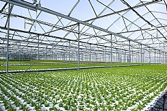 Israeli Grower Leads the World in Microgreens (Enlarge)