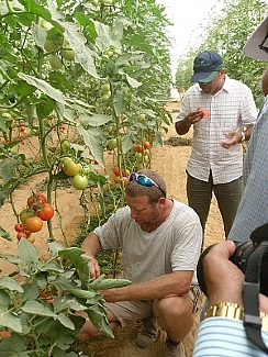 Advanced Israeli agriculture in the Negev