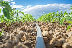 The Benefit of Micro Drip Irrigation for Emerging Markets Around the World (Enlarge)