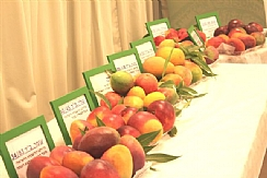 Israel's Mango Industry Overview