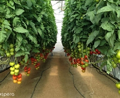 TLV firm to maximize yields by using artificial intelligence. (Enlarge)