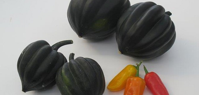 "The ""Table Sugar"" variety of Acorn Squash with each one weighing between 600 g. to 1kg"