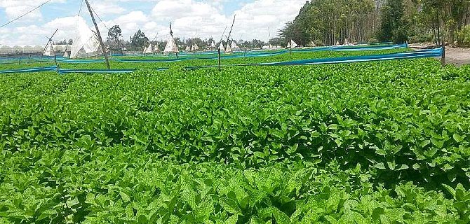 Controlling Irrigation and Fertigation