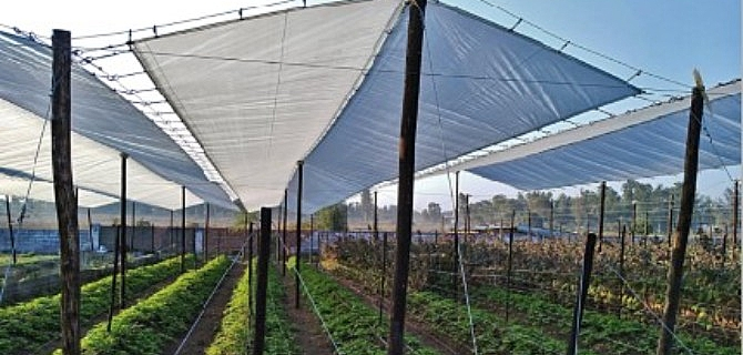 Improved Crop Protection with SOLARIG® Covers