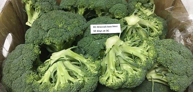 Broccoli - Iceless packaging solution