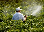 Pesticide and Fertilization