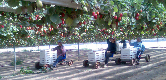 Soilless agricultural technology cultivation optimizes for Soil less farming
