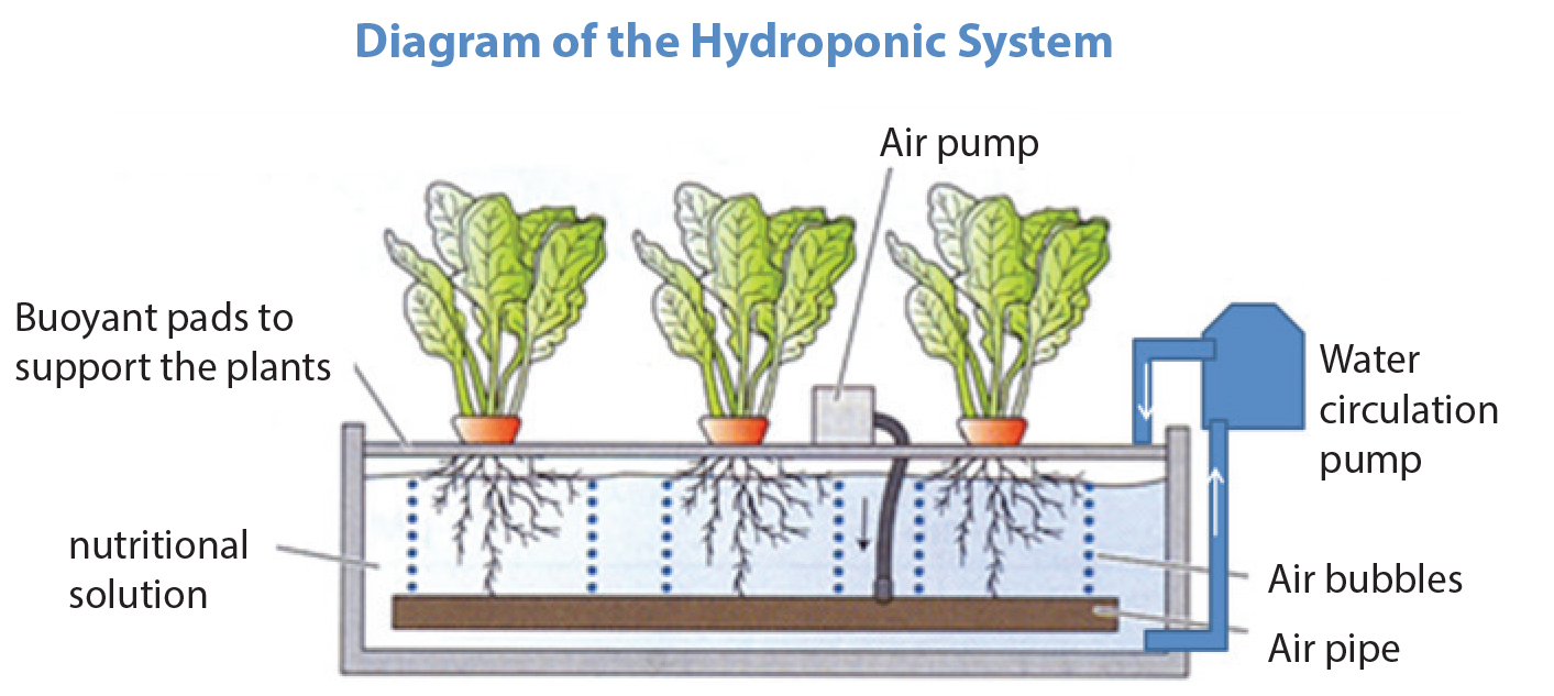 Hydroponics A New Method Of Growing Crops Without Soil
