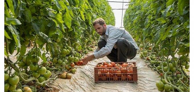 Good News for Tomato Growers and Consumers